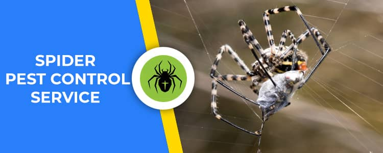 Spider Control Ainslie